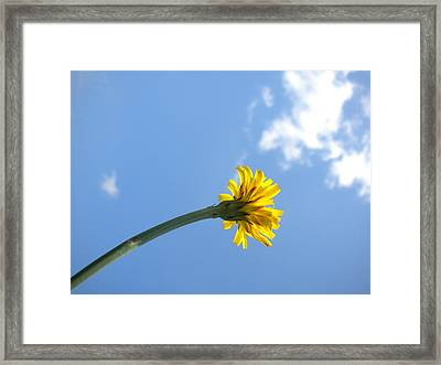 Framed Print featuring the photograph Mommy's 1st Flower by Diannah Lynch