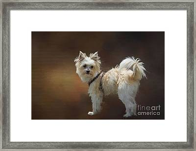 Mimo Framed Print