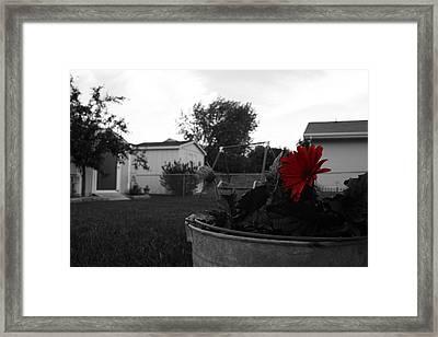 Mom's Backyard Framed Print