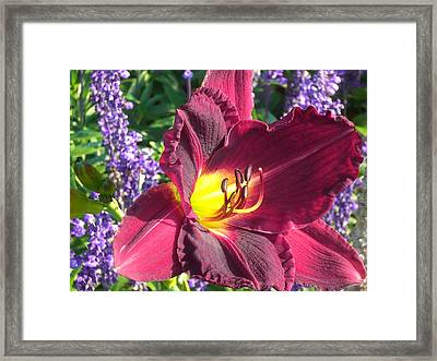 Mom's Lilly Framed Print by Wendy Robertson