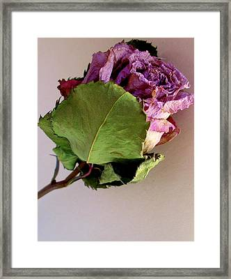 Mom's Rose Framed Print