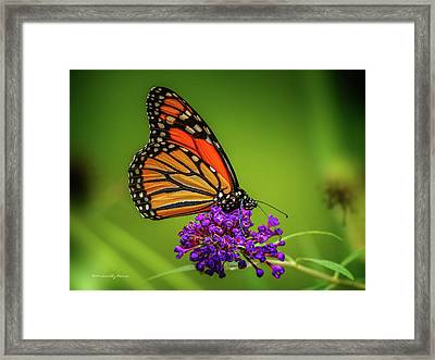 Monarch #1 Framed Print