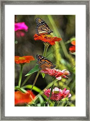 Monarch 8 Framed Print
