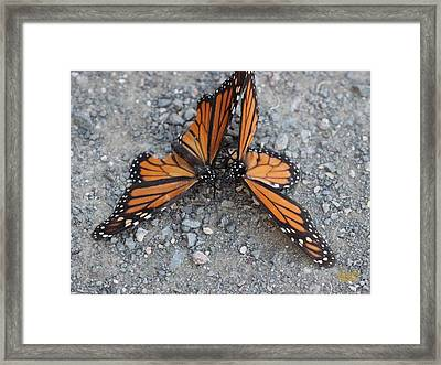 Monarch Afterglow Framed Print