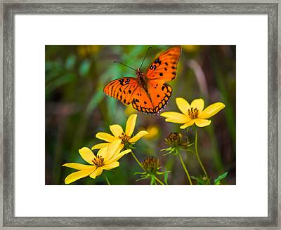 Monarch Among The Daisies Framed Print