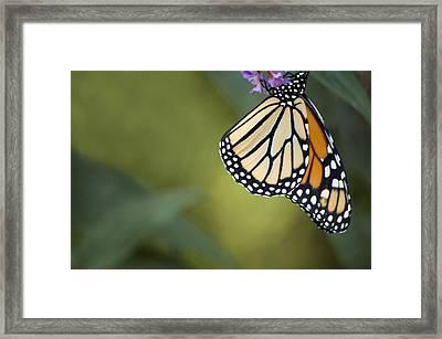 Framed Print featuring the photograph Monarch Art by Elsa Marie Santoro