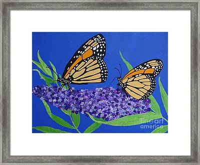 Monarch Butterflies On Buddleia Flower Framed Print