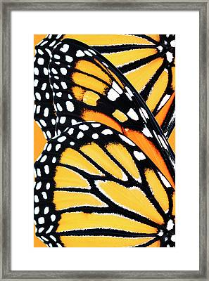Monarch Butterfly Abstract Pattern Framed Print