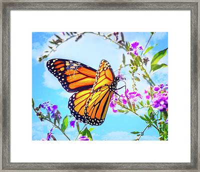 Monarch Butterfly And Blue Skies Framed Print