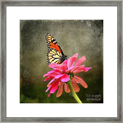Monarch Butterfly And Pink Zinnia Framed Print by Judy Palkimas