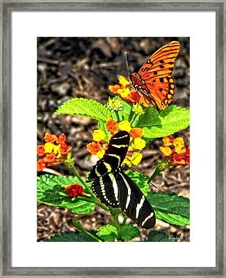 Monarch Butterfly And Zebra Butterfly Framed Print