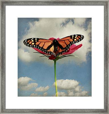 Monarch Butterfly Framed Print by Chris Berry