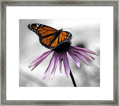Monarch Butterfly Framed Print by Evelyn Patrick