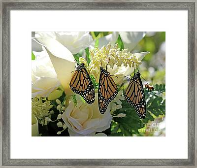 Monarch Butterfly Garden  Framed Print