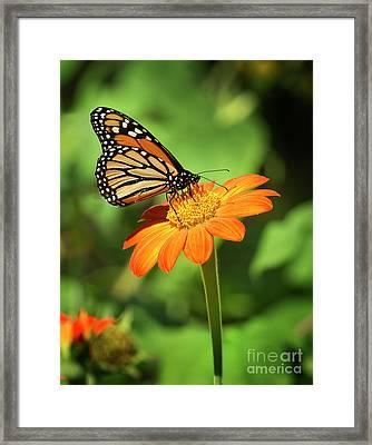 Monarch Butterfly II Vertical Framed Print