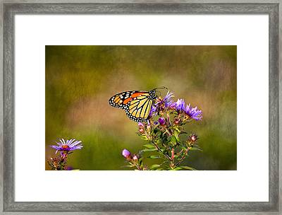 Monarch Butterfly In The Afternoon Sun Framed Print by James Steele