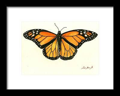 Monarch Framed Prints