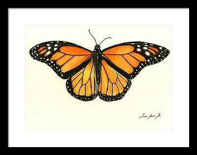 Monarch Butterflies Framed Prints
