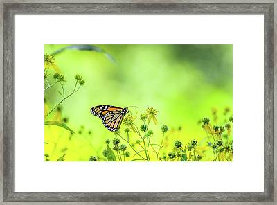 Framed Print featuring the photograph Monarch Butterfly by Lori Coleman
