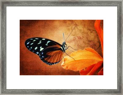 Monarch Butterfly On An Orchid Petal Framed Print