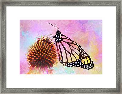Monarch Butterfly On Coneflower Abstract Framed Print