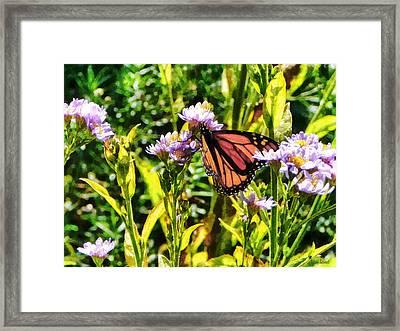 Monarch Butterfly On Purple Wildflower Framed Print