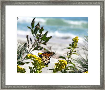 Monarch By The Sea Framed Print by Tom LoPresti