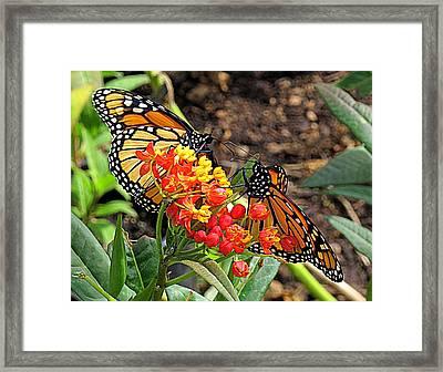 Monarch Handshake Framed Print