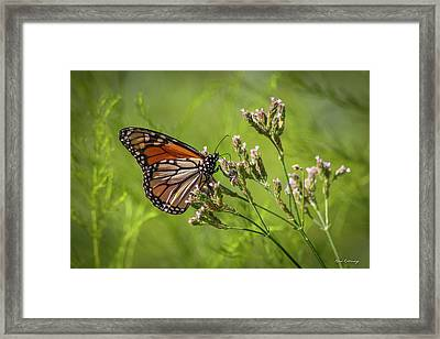 Monarch Headed South  Framed Print by Reid Callaway
