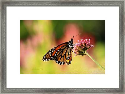 Monarch In Summer Framed Print by Chris Berry