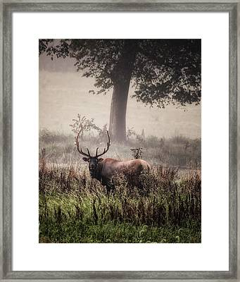 Framed Print featuring the photograph Monarch In The Mist by Michael Dougherty
