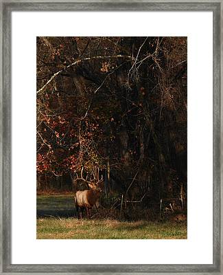 Framed Print featuring the photograph Monarch Joins The Rut by Michael Dougherty