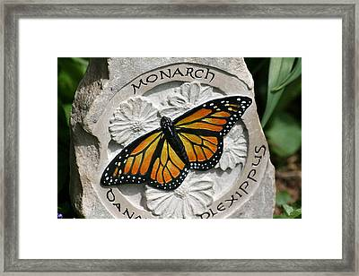Monarch Framed Print by Ken Hall