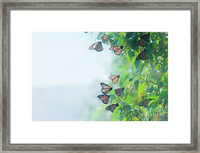 Monarch Landing Framed Print by Janal Koenig