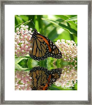 Framed Print featuring the photograph Monarch Lunch by Rick Friedle