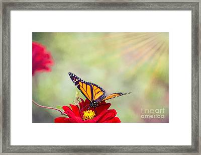 Monarch Magic Framed Print