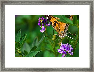 Monarch Framed Print by Marlo Horne