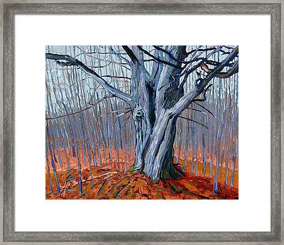 Monarch Of The Forest Framed Print by Phil Chadwick