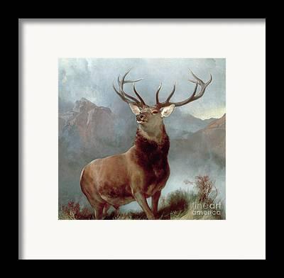 Buck Framed Prints