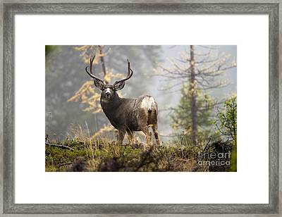 Monarch Of The Mountain Framed Print