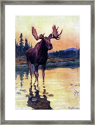 Monarch Of The North Framed Print