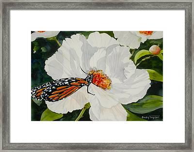 Monarch On A Poppy Framed Print