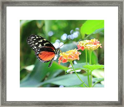 Monarch On Flower Framed Print
