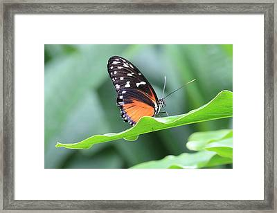 Framed Print featuring the photograph Monarch On Green Leaf by Angela Murdock