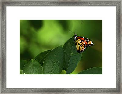 Framed Print featuring the photograph Monarch On Leaf by Ann Bridges