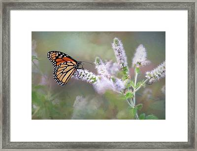 Framed Print featuring the photograph Monarch On Mint 1 by Lori Deiter