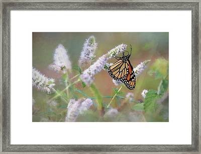 Framed Print featuring the photograph Monarch On Mint 2 by Lori Deiter