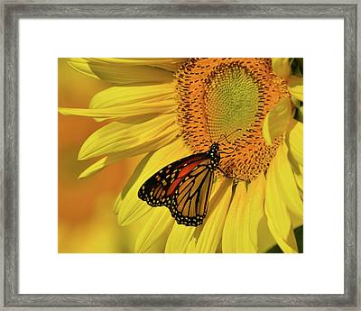 Framed Print featuring the photograph Monarch On Sunflower by Ann Bridges