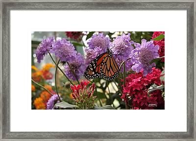 Monarch Playground Framed Print