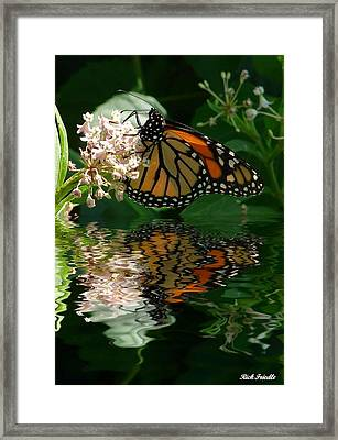 Framed Print featuring the photograph Monarch Reflection by Rick Friedle